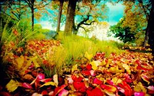 Various-Autumn-Colors-1920x1200