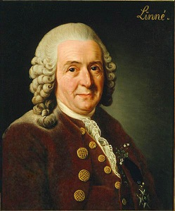 Carolus_Linnaeus_(cleaned_up_version)