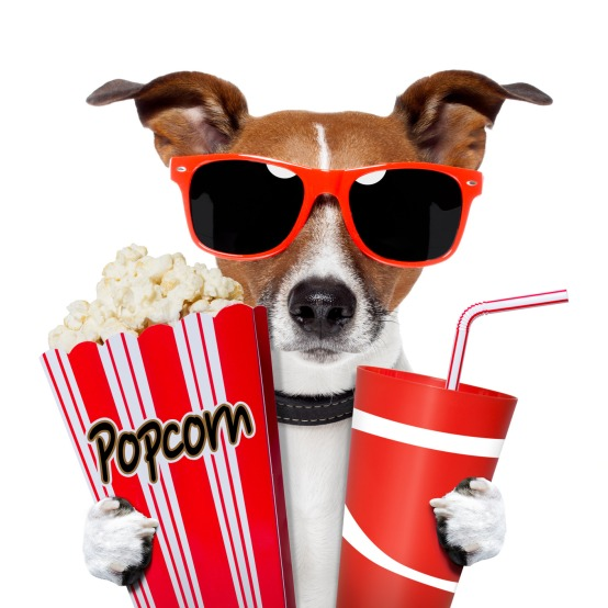 The Dog EC Hired to Help Host Movie Night Friday.