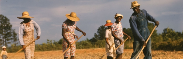 sharecroppers_chopping_cotton_-_1941-h